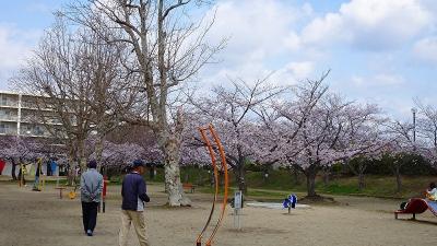 緑ヶ丘公園と瑞ケ池公園の花見をしてきました その9。