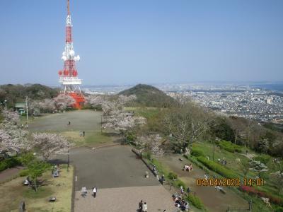 湘南平の春・関東ふれあいの道を歩く