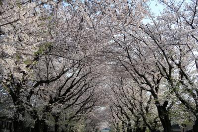 2020の綾西緑地(神奈川県綾瀬市)へ・・・