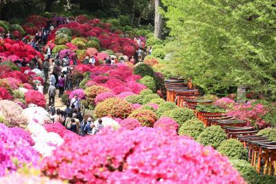 ふらっとお花見、根津神社のつつじまつりへ