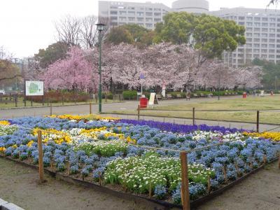 鶴舞公園の桜です〈2〉