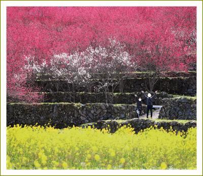 Solitary Journey[2025]花桃祭りはコロナで中止でも、天国に一番近い里はまさに夢の桃源郷!でした。<川角集落>島根県邑南町