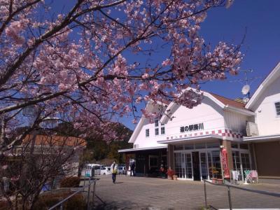 東海道~中山道ドライブ2020年3月①(静岡編)