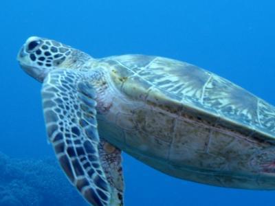 2020年 沖縄本島 観光と座間味へダイビング part2
