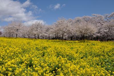 みやぎ 千本桜 の森