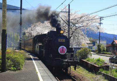 大井川鐡道 桜とSLを求めて