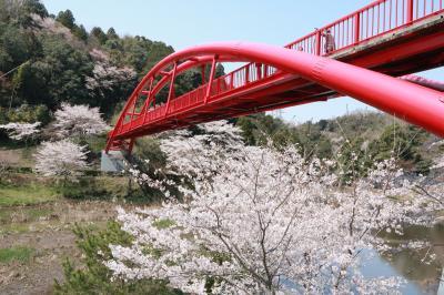 ショートトリップ桜巡り♪ 愛知牧場、豊田市美術館&王滝渓谷の桜♪