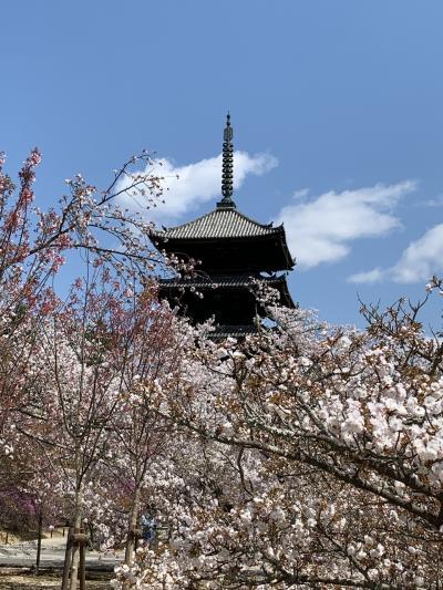 城下町旅ラン(15)桜の季節に嵐山から金閣寺・京都