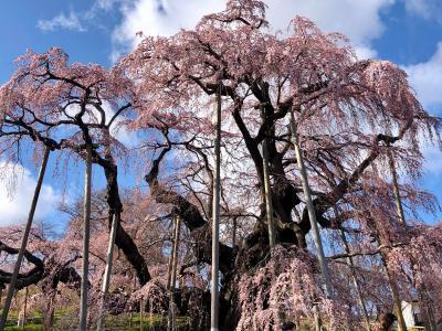 三春滝桜への道~白河の関を越えて
