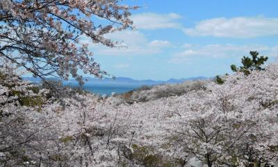 2020年4月 山口県・山陽小野田市 竜王山に桜を見に行きました。海と桜がきれいでした。