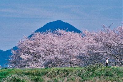 《2020.April》あみんちゅなにげに関西街歩きの旅滋賀そのⅡ之①~守山・笠原の桜編~