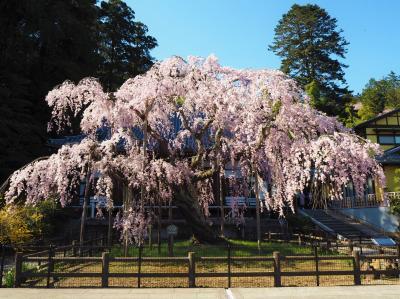 今年は青春18きっぷで関西方面の桜を愛でられないので近場でお花見 [1]太平山周辺