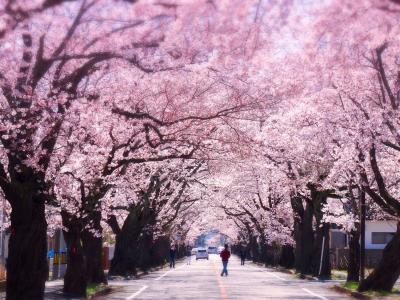 ふくしま復興!富岡桜トンネルと、いわきお宝めぐり。ときわの宿 浜とくで旅三昧!