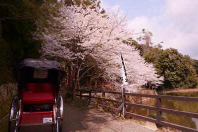 桜咲く保津川をトロッコで眺める 2020京都②