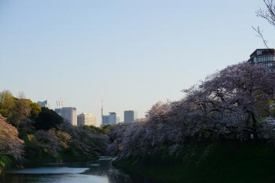 東京散歩旅 北の丸公園~千鳥ヶ淵、2020年桜見納め