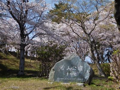 2020年4月 山口県・山陽小野田市 須恵健康公園と若山公園に桜を見に行きました。