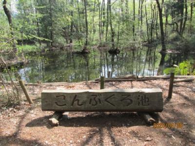 柏市の柏の葉・こんぶくろ池自然博物公園・大堀川源流
