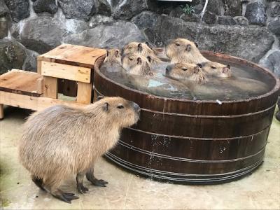 伊豆シャボテン動物公園でシャボテンと動物たちに癒されてきた