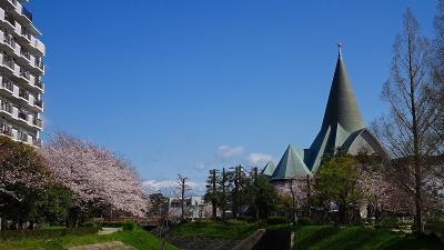 伊丹市の十六名公園へしだれ桜を観に行きました その4。