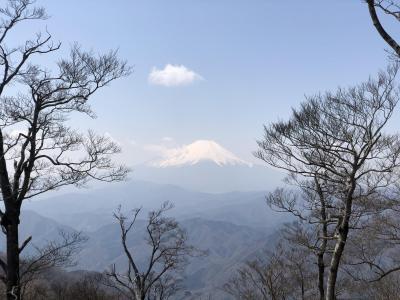 檜洞丸登山~早春の丹沢、ミツマタの山を訪ねて