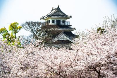桜吹雪の中津 2020