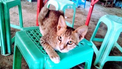 犬とミャンマーと私~愛すべきミャンマーの犬たち、猫たち~【5】
