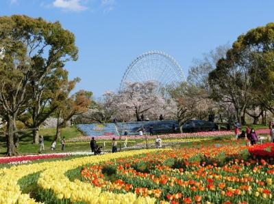 「新型コロナ・ウイルス」で行動自粛中、大阪万博記念公園 「チューリップの花園~ネモフィラ畑」をぶらぶら散歩。(2020)