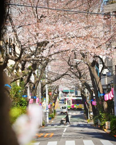 いろいろあっても桜を楽しむ2020 東京さくらトラムをめぐる散歩