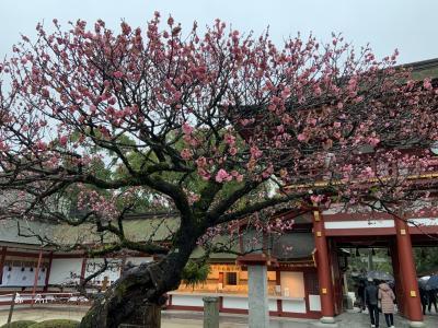 大宰府・福岡・別府(1/3:大宰府編)