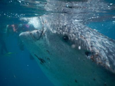 ジンベイザメと泳ぐフィリピンセブ島の旅 1日目