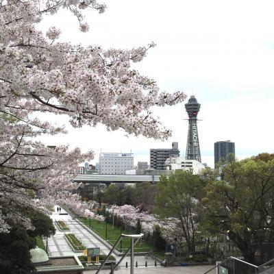 桜満開の天王寺公園周辺