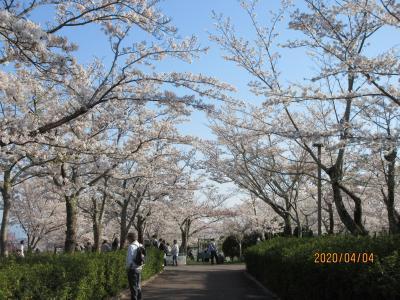 名勝摂津峡公園(通称桜公園)に散歩がてら花見に行って来ました