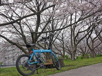 桜見物 2020.03.30 =4.自転車でGO!潤井川沿いを走りました=