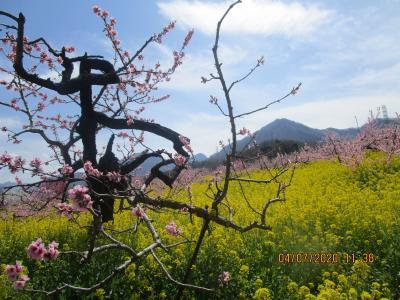 甲斐路は春爛漫 : 桃源郷と一之釜