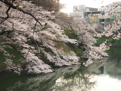 来年は晴れやかな気持ちでお花見を! 千鳥ヶ淵の桜