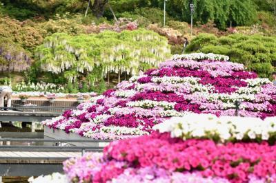 藤の花や色々な花から元気のお裾分け♪平打ち麺の佐野ラーメンも美味しかったなぁ~(^^