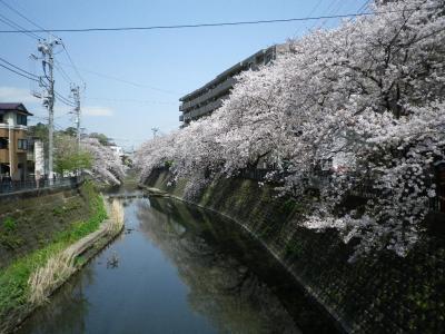 横浜・大岡川プロムナード散歩