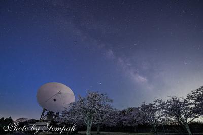 夜桜を見ながら宇宙に想いを馳せる ~さくら宇宙公園の桜、星空&電波望遠鏡~