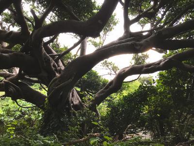 奄美群島1人旅 ~3/7日目・徳之島満喫、移動して古仁屋へ