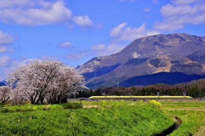 満開な桜色に染まる春の伊吹山の風景を探しに訪れてみた・・・そして幸せの黄色い新幹線