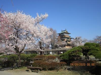 高島城と高遠城址の桜