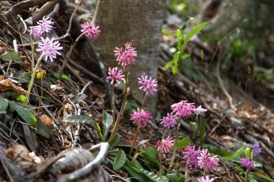 ◆福島・四季・彩々・Part,85・春さくら色