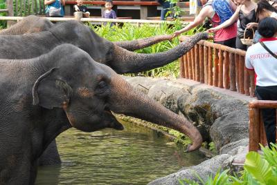 動物ずくめのシンガポールひとり旅 18 シンガポール動物園 ゾウと動物ショーの部