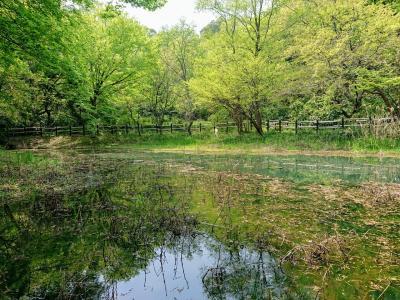 ここは信州か?新緑の舞岡公園