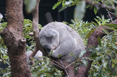 令和初めはシドニーへ ④ (タロンガ動物園とロイヤル・ボタニックガーデン)