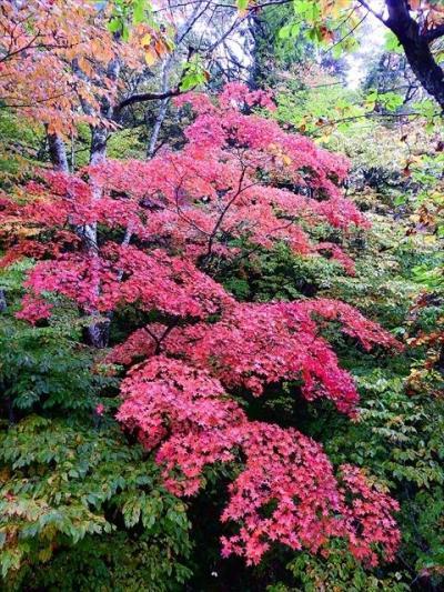 ネコバリ岩の紅葉