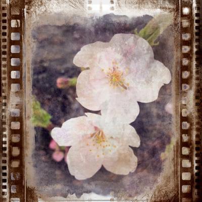 今年のお花見は… 2020年 3~4月