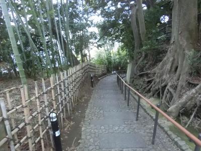 天神坂(三樹荘の樹木)