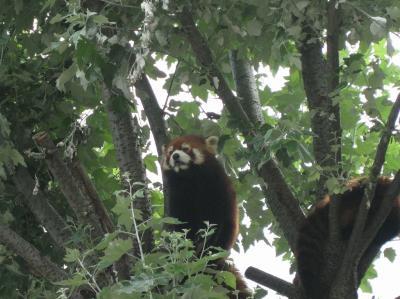 旭山動物園リベンジがお流れになりました。