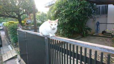 沖縄でのんびりネコと戯れる